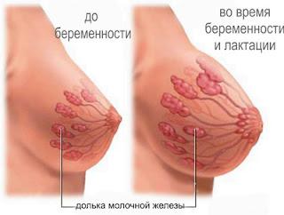 изменения структуры груди