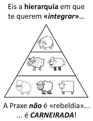 hierarquia de carneiros