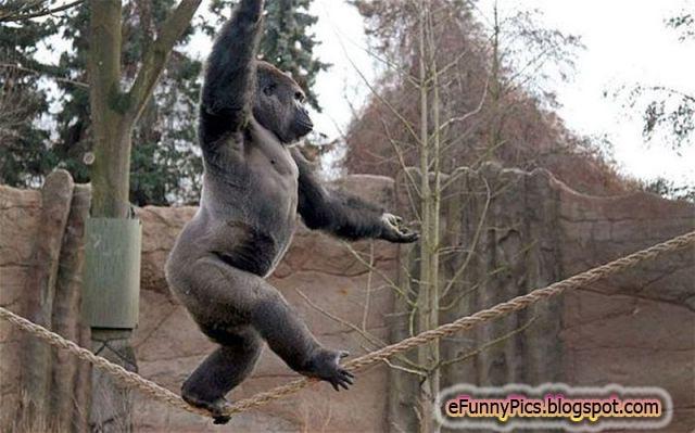 The Monkey Trick