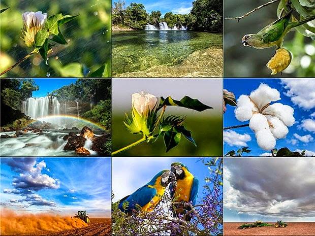 Mosaico de fotos que faz parte do projeto do livro de Rui Rezende. (Foto: Rui Rezende/ Arquivo Pessoal)