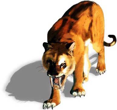 Sabertooth Tiger Drawings http://bigwilds.blogspot.com/2012/09/saber-tooth-tiger-pictures.html#!