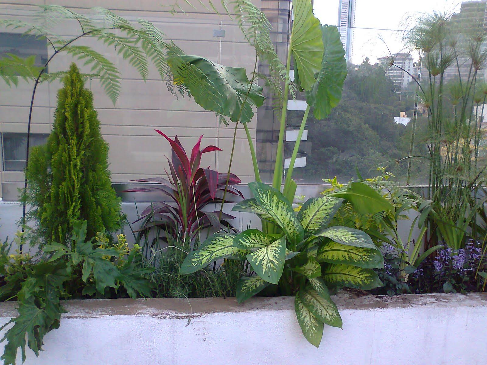Jardineria xochimilco jardineria xochimilco for Jardineros en xochimilco