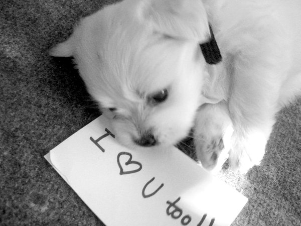 I Love You Cute Puppies wallpaper 1080p