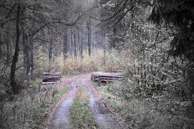 zagubiony na Wzgórzach Strzelińskich