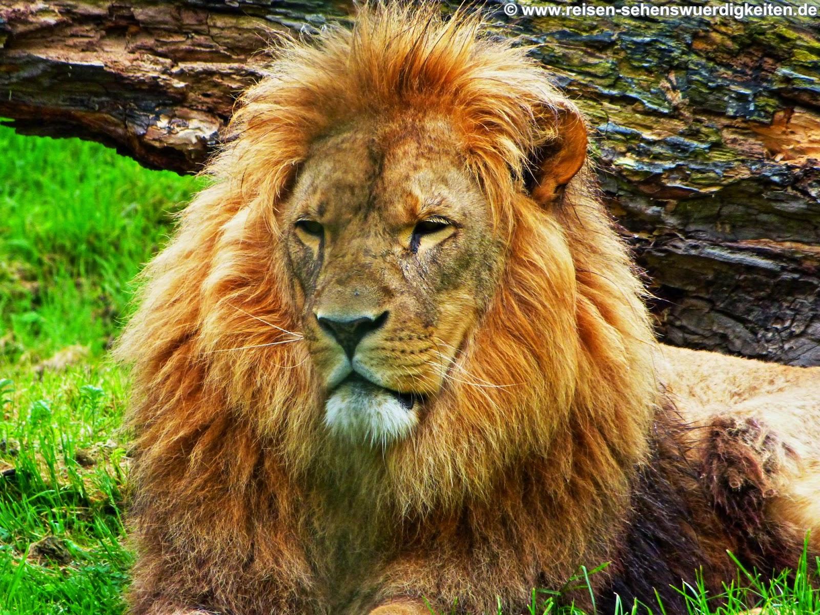 PC Hintergrundbilder kostenlos - Tiere, Natur, Reise, Städte