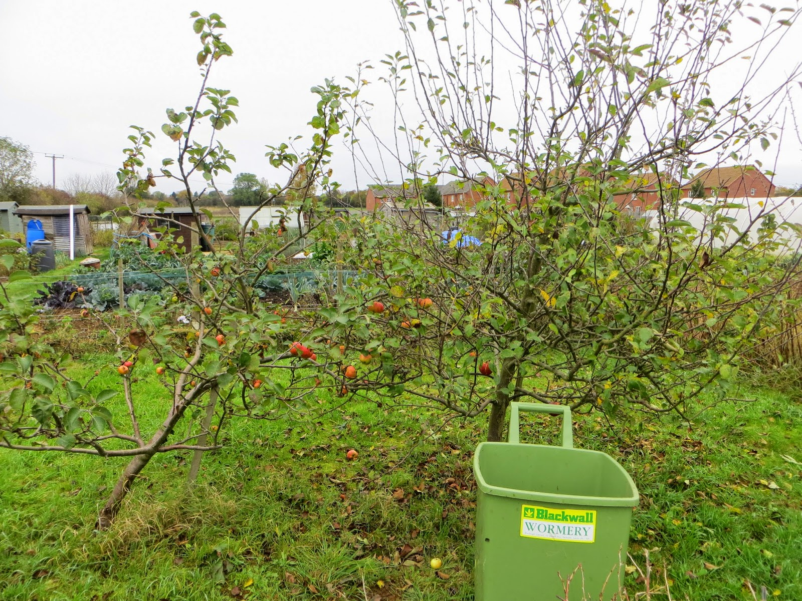 apple trees, pruning, bitter fruit