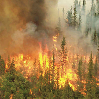 Forest Fires Impact On Ecological and Environmental Degradation