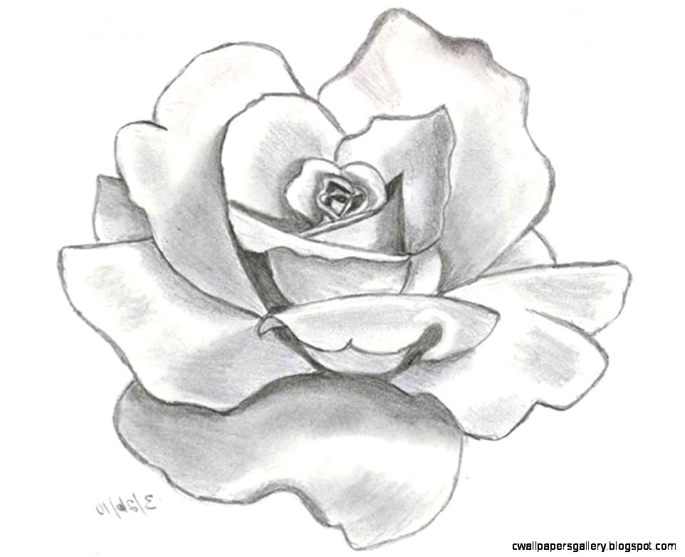 Flower Drawings With Pencil  Best Drawing Sketch Ideas  drawings