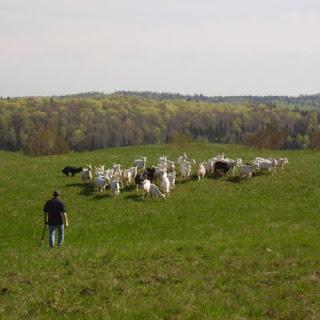 Cassis et Melisse Farm
