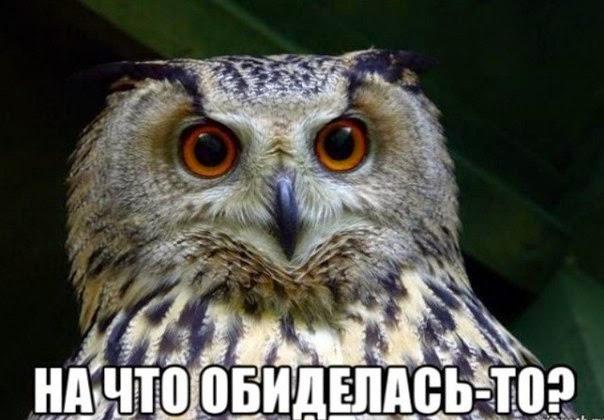 прикол сова