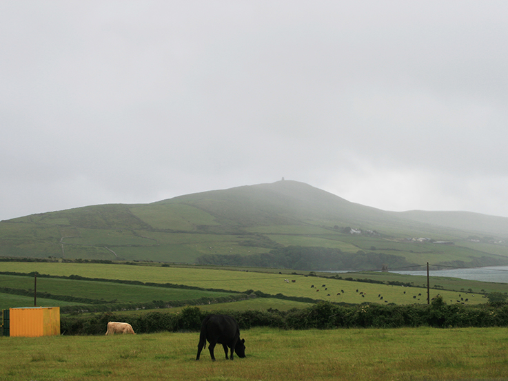 irish countryside and cows