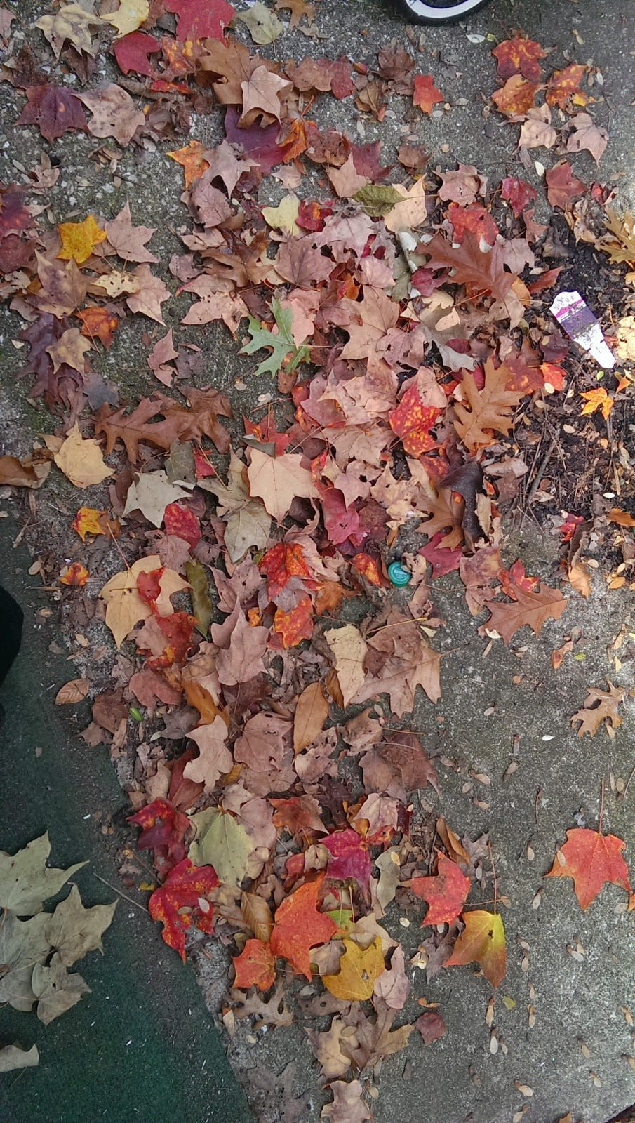 A snapshot of beautifully brown, red, tan leaves right before the cold snap.