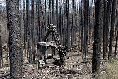 A tree-cutting machine pauses amid the scorched remains of Stanislaus National Forest, near Yosemite National Park. There the Rim fire, fed with years of accumulated brush, turned into a record inferno that spread into the park.  (Credit: Rich Pedroncelli / AP Images) Click to enlarge.