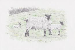 Protective Ewe