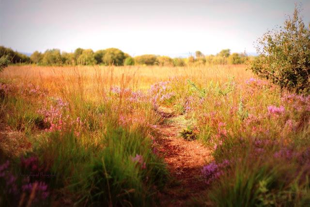 path in the fields