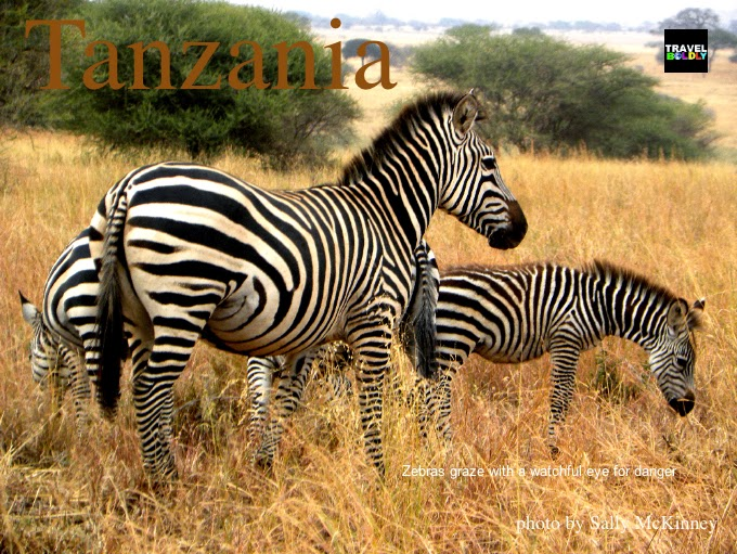 Zebra Serengeti East Africa. Photo Sally McKinney for TravelBoldly.com