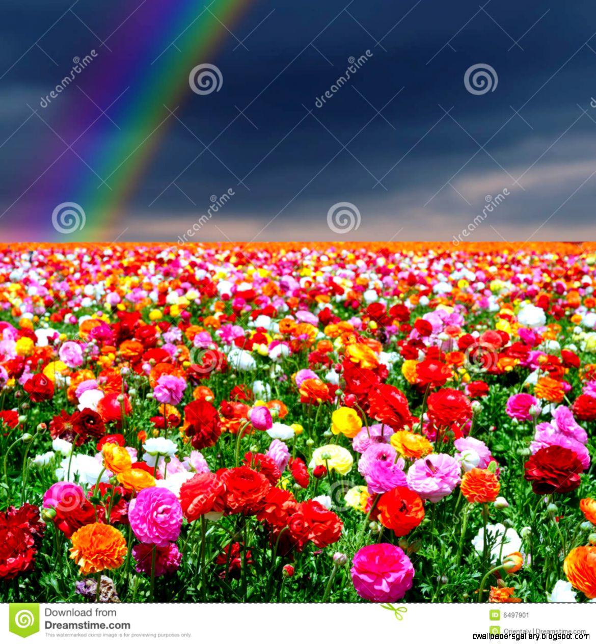 Rainbow And Flowers Background Stock Image   Image 6497901
