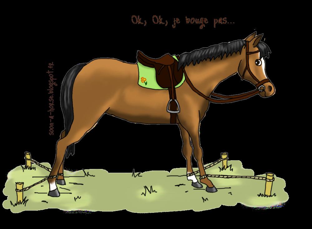 Soon a horse mon cheval bouge au montoir que faire for Le jardin qui bouge