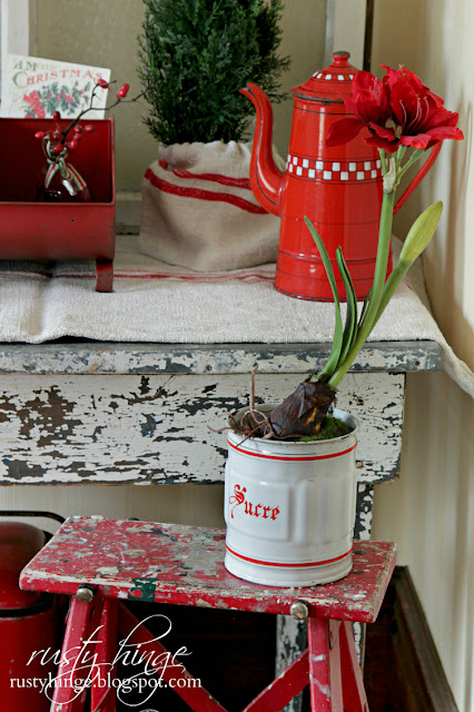 Red Amaryllis in a vintage French enamelware canister