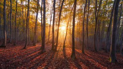 Download free beautiful nature wallpapers hd widescreen high quality desktop!