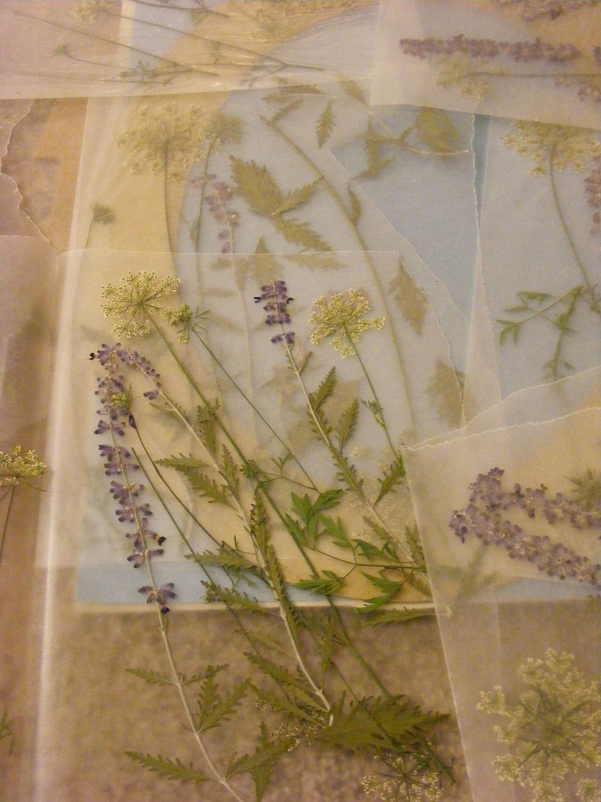 The dusty lane queen annes lace pressed flowers in a frame about a week later they were finely pressed and ready to use i drew inspiration from an online how to heres a link mightylinksfo