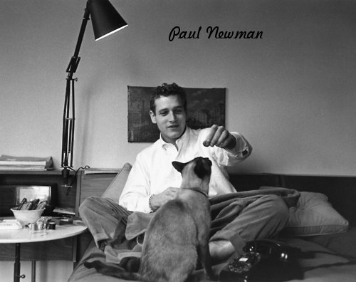 Image Result For Newman S Dog