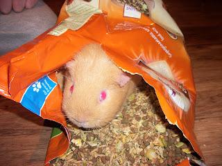 Guinea pig dry food