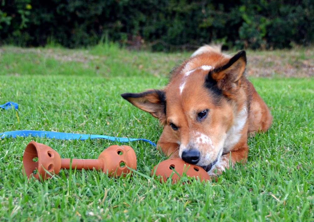 Bonball Dog Toy