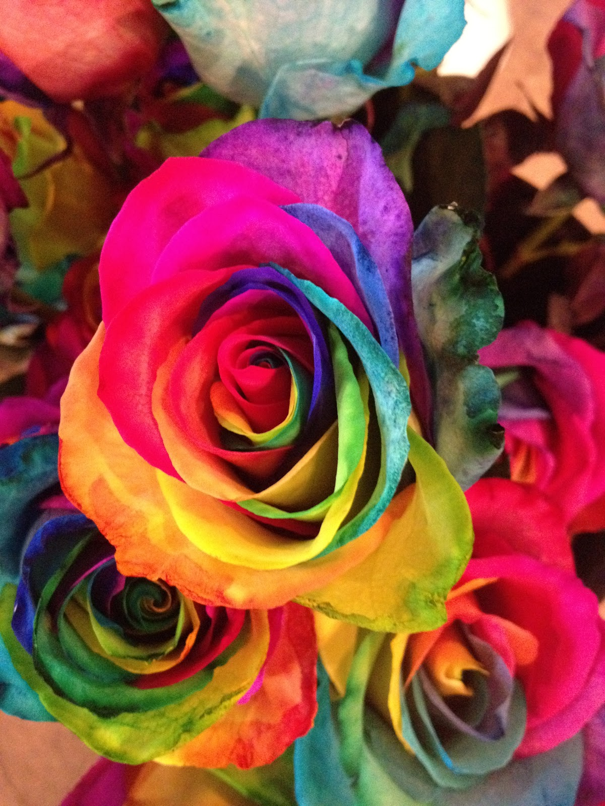 The gallery for --> Neon Rainbow Roses
