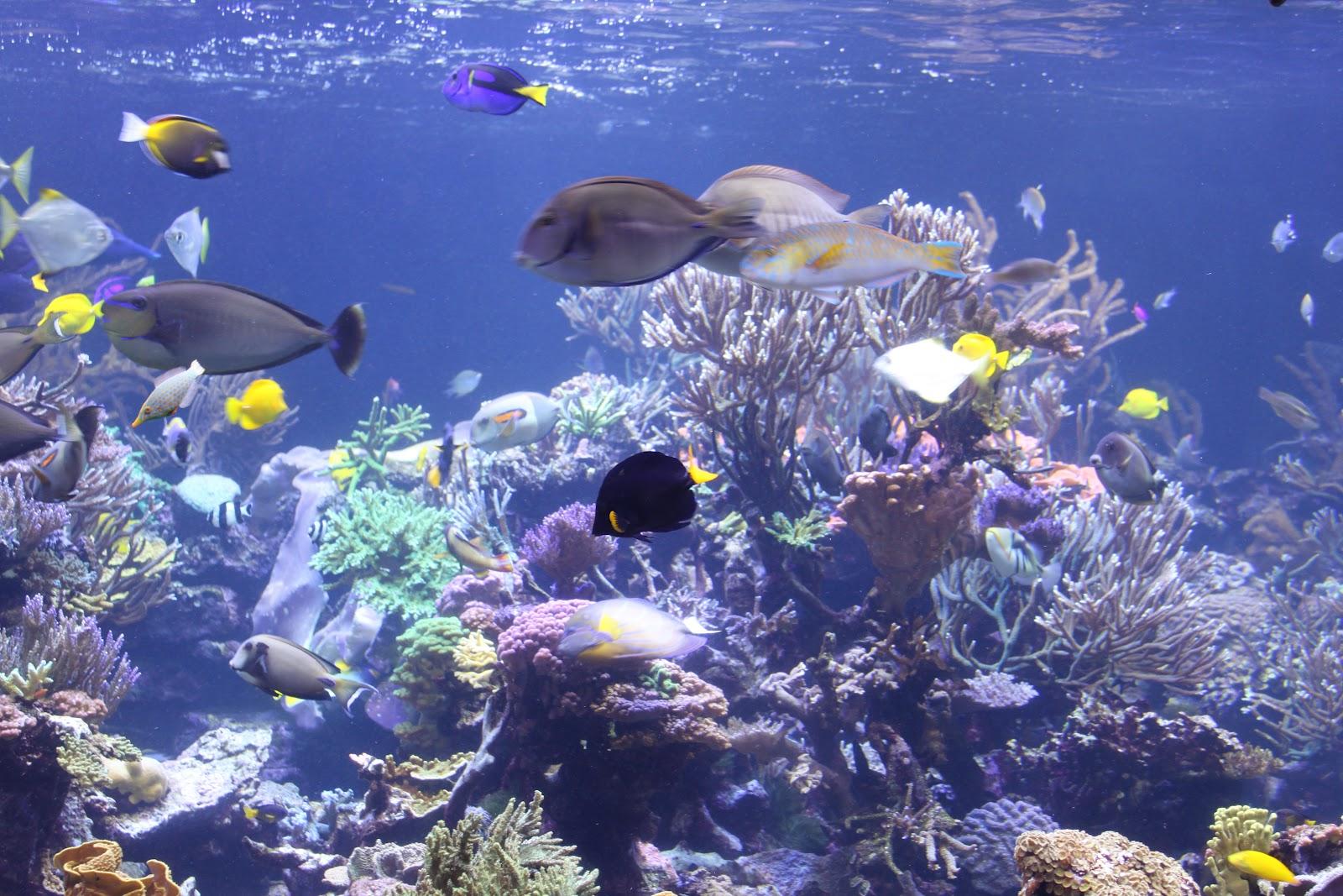 Aquarium Store Long Island Long Island Aquarium