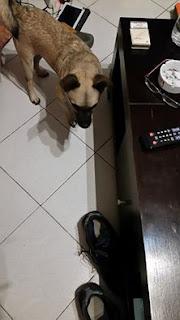 Βρεθηκε σκυλάκος στα κατω Πετραλωνα. Τον αναζητά κάποιος?