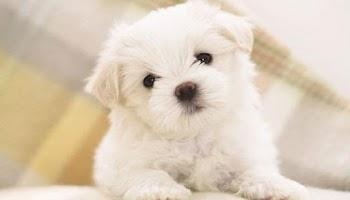 Αρχίζει δωρεάν στείρωση και σήμανση ιδιόκτητων ζώων στο νομό Χανίων