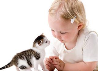 25 Curiosidades Sobre Los Gatos Que Te Sorprenderán