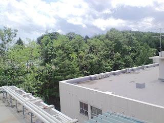 写真:階段の窓から見える病棟の周囲の木々