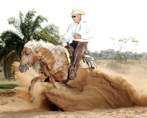O Universo dos Cavalos Quarto de Milha O cavalo mais  ~ Wallpaper Cavalos Quarto De Milha