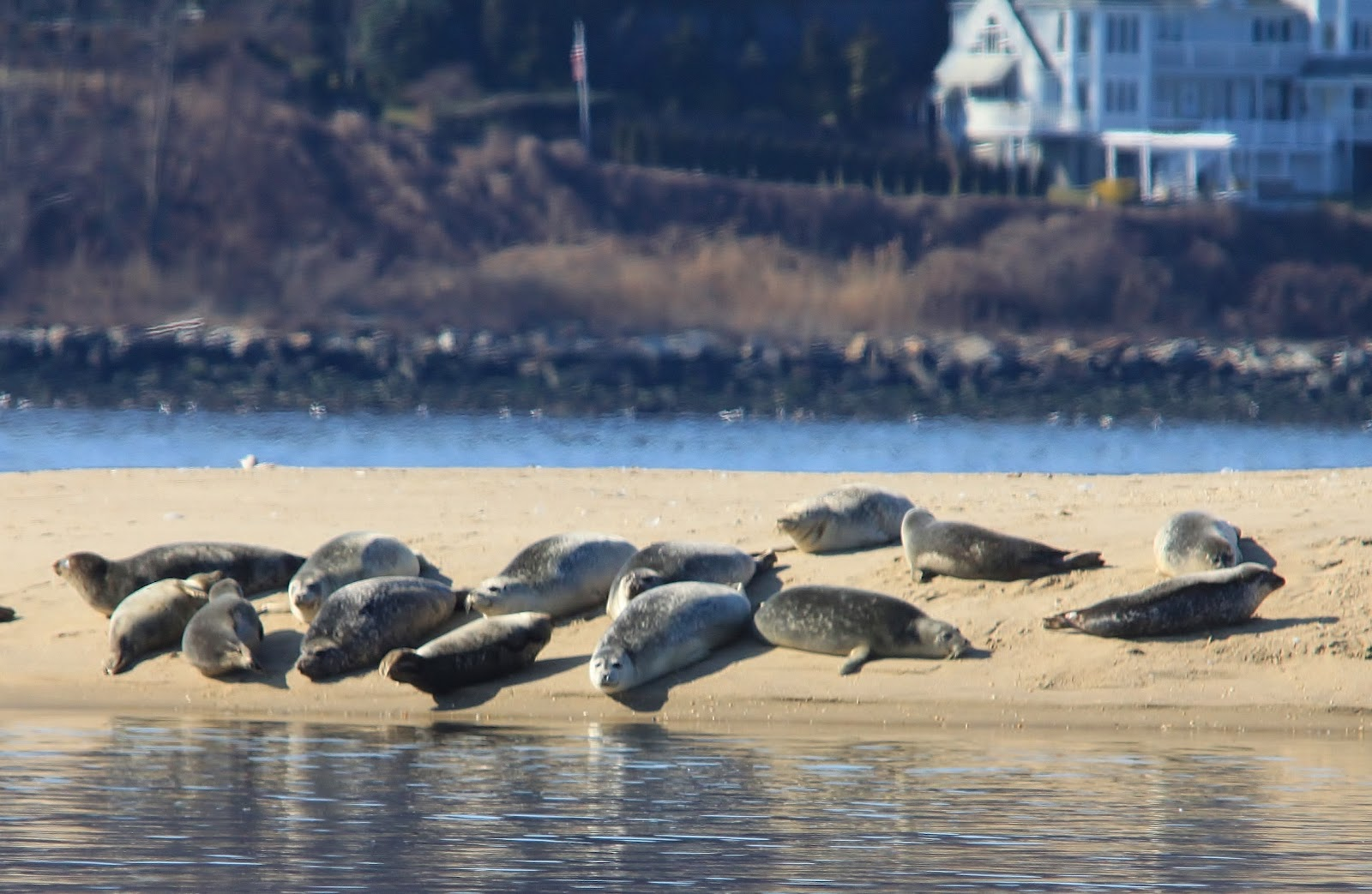Viewing Seals On Long Island November