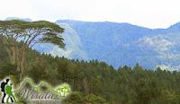 gunung malino