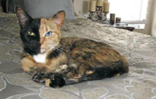 Rumahkufamilyku Kucing Biasa Bukan Kucing Siam