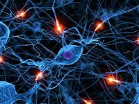 Brain Cells2