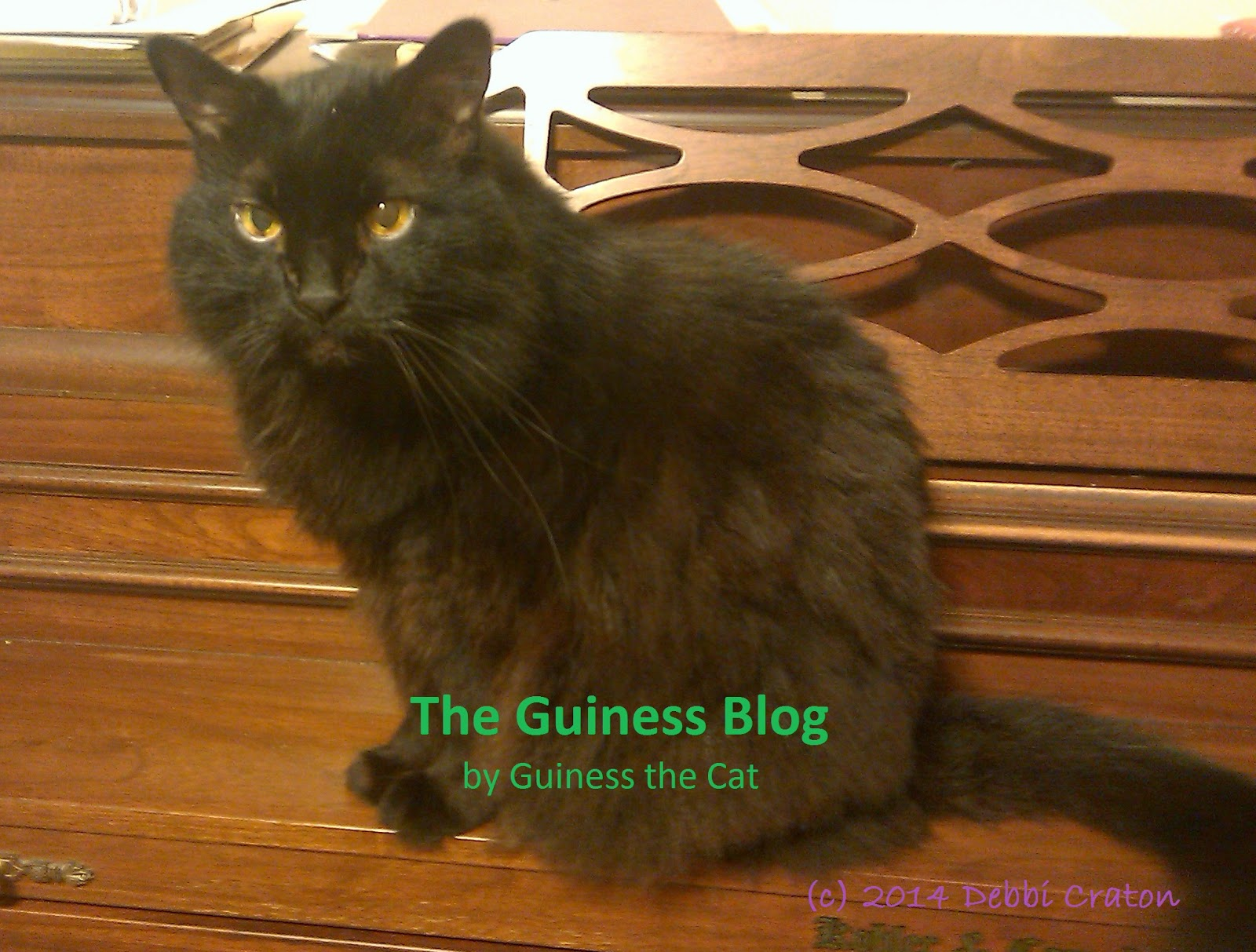 Help Me Celebrate National Black Cat Day, by Guiness the Cat