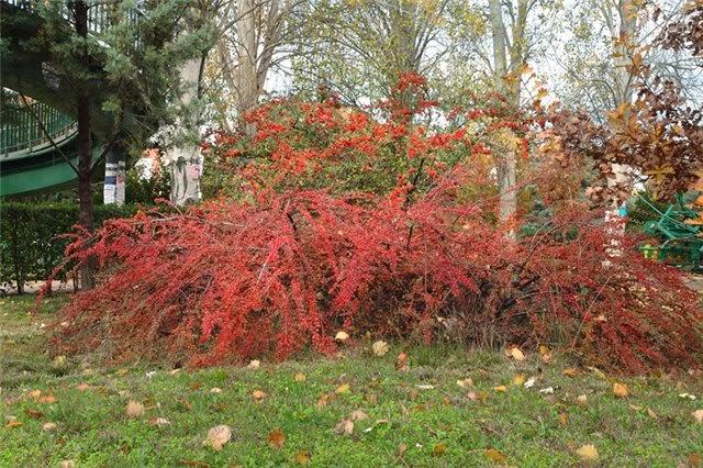 Arte y jardiner a plantas de rocalla diversas especies 8 - Plantas para rocallas ...