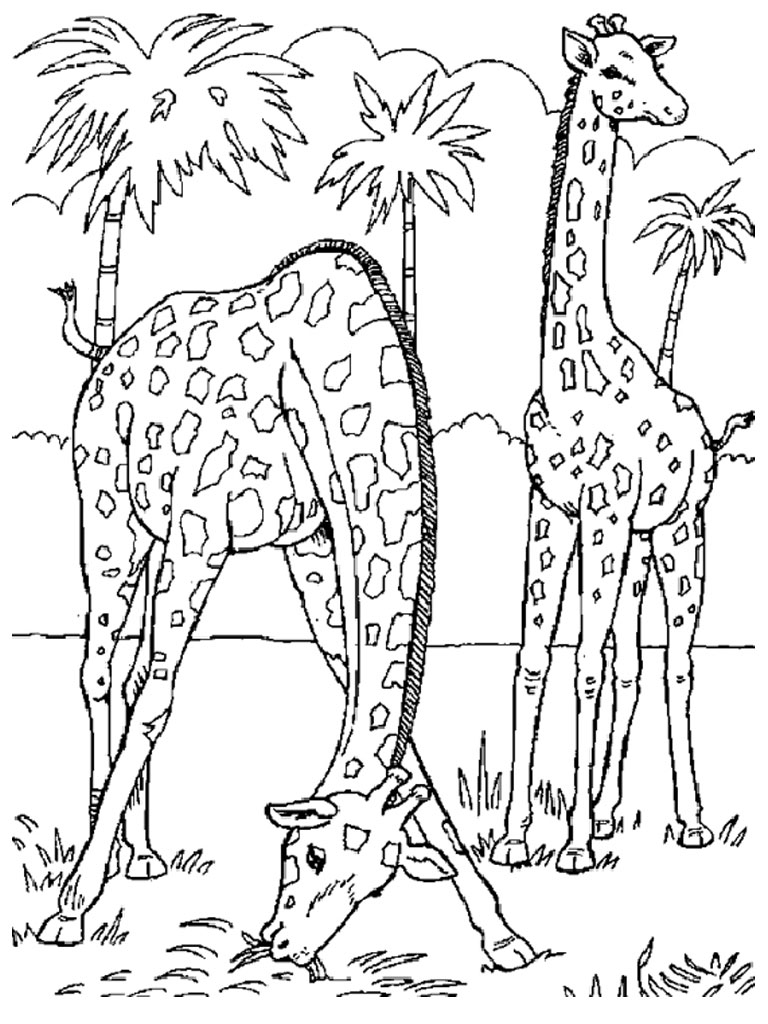 Giraffe coloring pages realistic realistic coloring pages for Coloring pages of wild animals