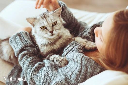 Czy koty potrafią zrozumieć, co do nich mówimy?