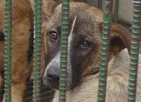 Fazendeiros comem cães e gatos após enorme aumento no preço da carne bovina na Suíça