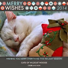 Merry Christmas Cats of Wildcat Woods