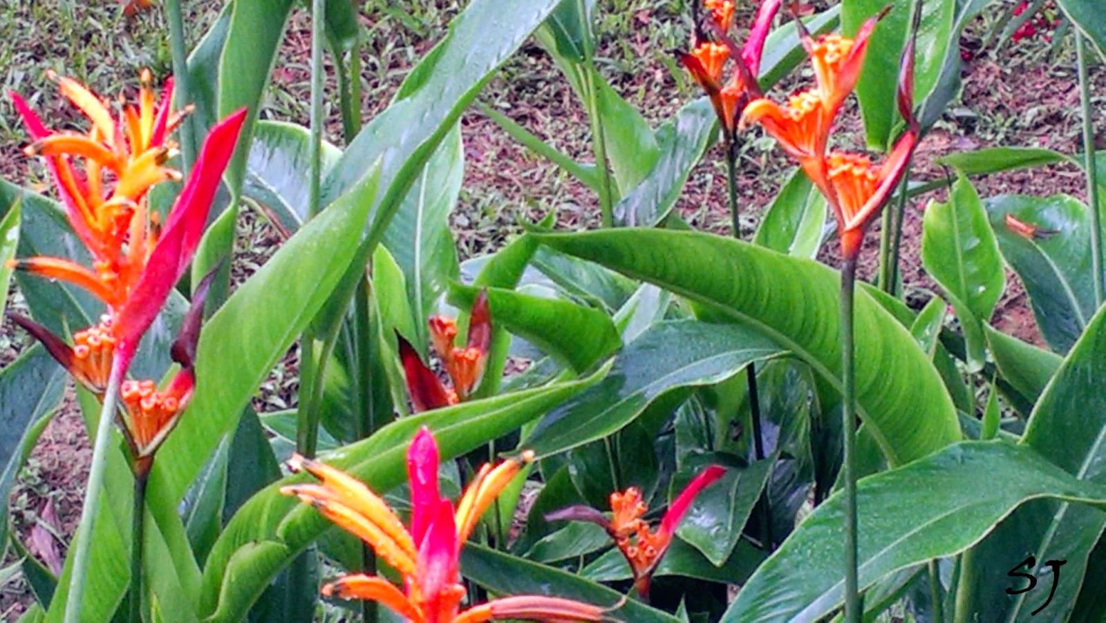 FRIM KEPONG;trees;garden;botanic garden