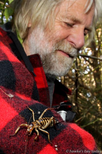 John Berry, volunteer, with a Hawke's Bay tree weta - visit by Governor-General Lt Gen Rt Hon Sir Jerry Mateparae, to Cape Sanctuary, Cape Kidnappers, Hawke's Bay. photograph