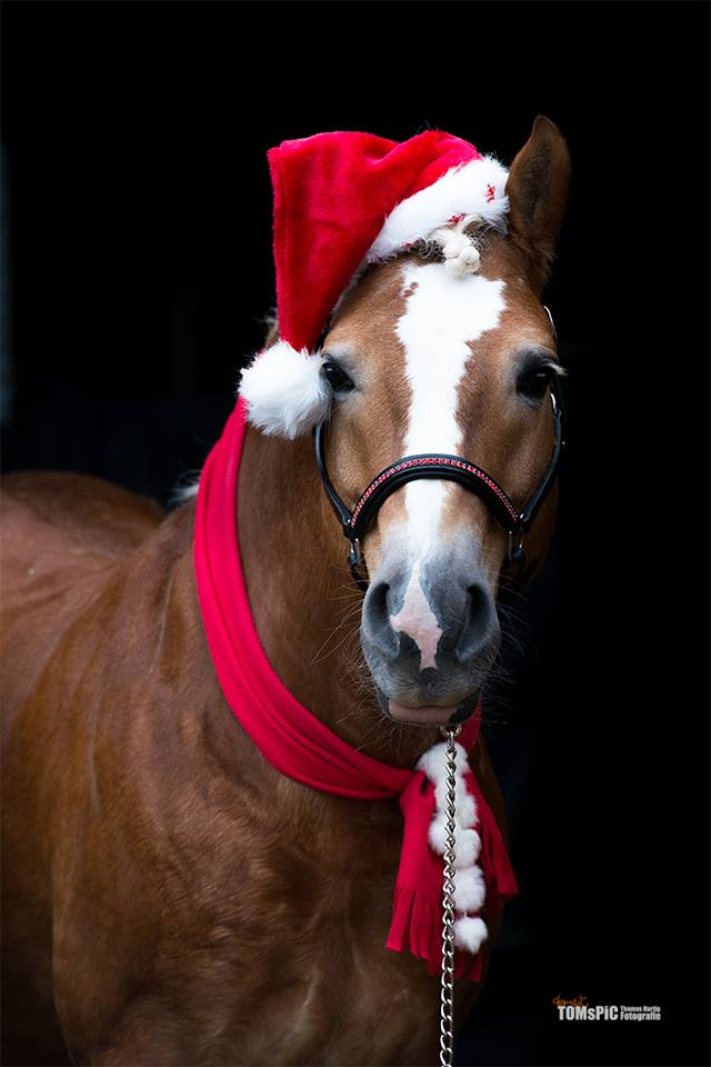 christmas horse pictures free