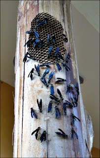 black wasps making a nest on a post