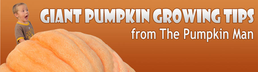Giant Pumpkin Growing Tips From The Pumpkin Man